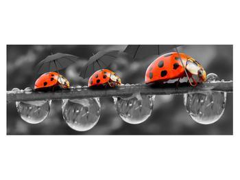 Obraz lienok sedembodkových s dáždnikmi (K012059K14558)