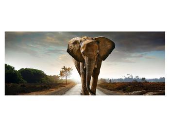 Tablou cu elefant (K012479K14558)