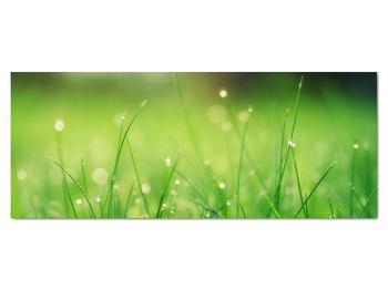 Obraz - rosa na tráve (V020169V14558)