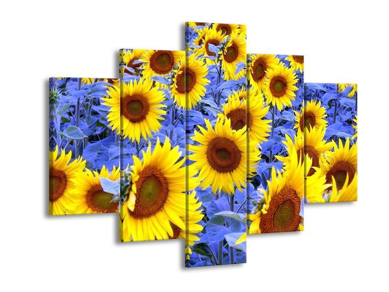 Obraz slunečnic (F000619F150105)