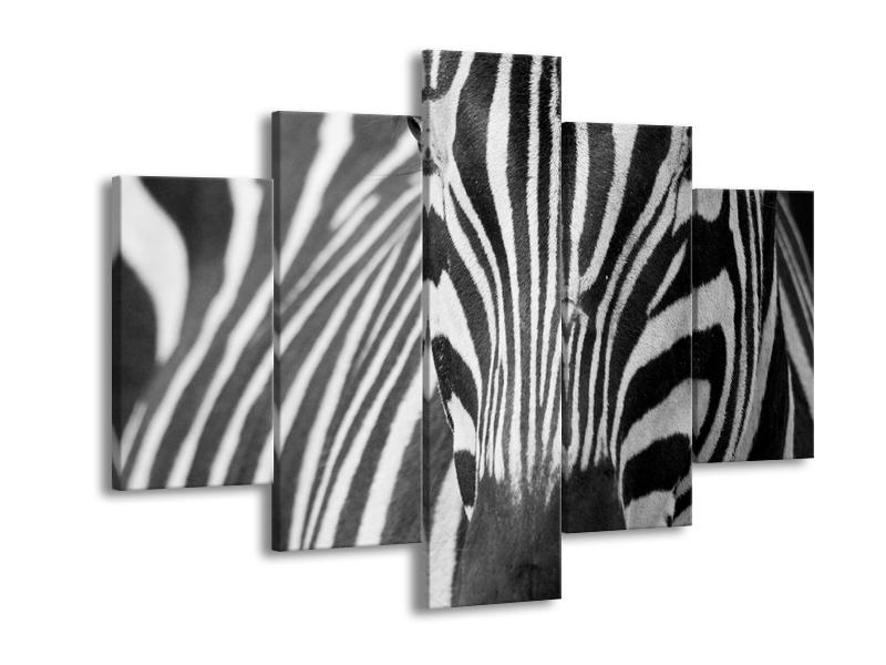 Obraz černobílého detailu zebry (F000715F150105)