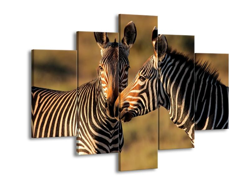 Obraz dvou zeber  (F002641F150105)