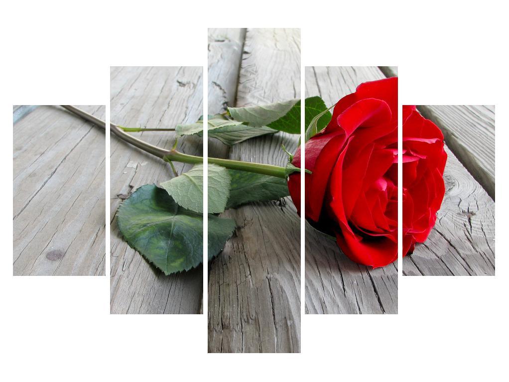 Slika vrtnice (K011113K150105)