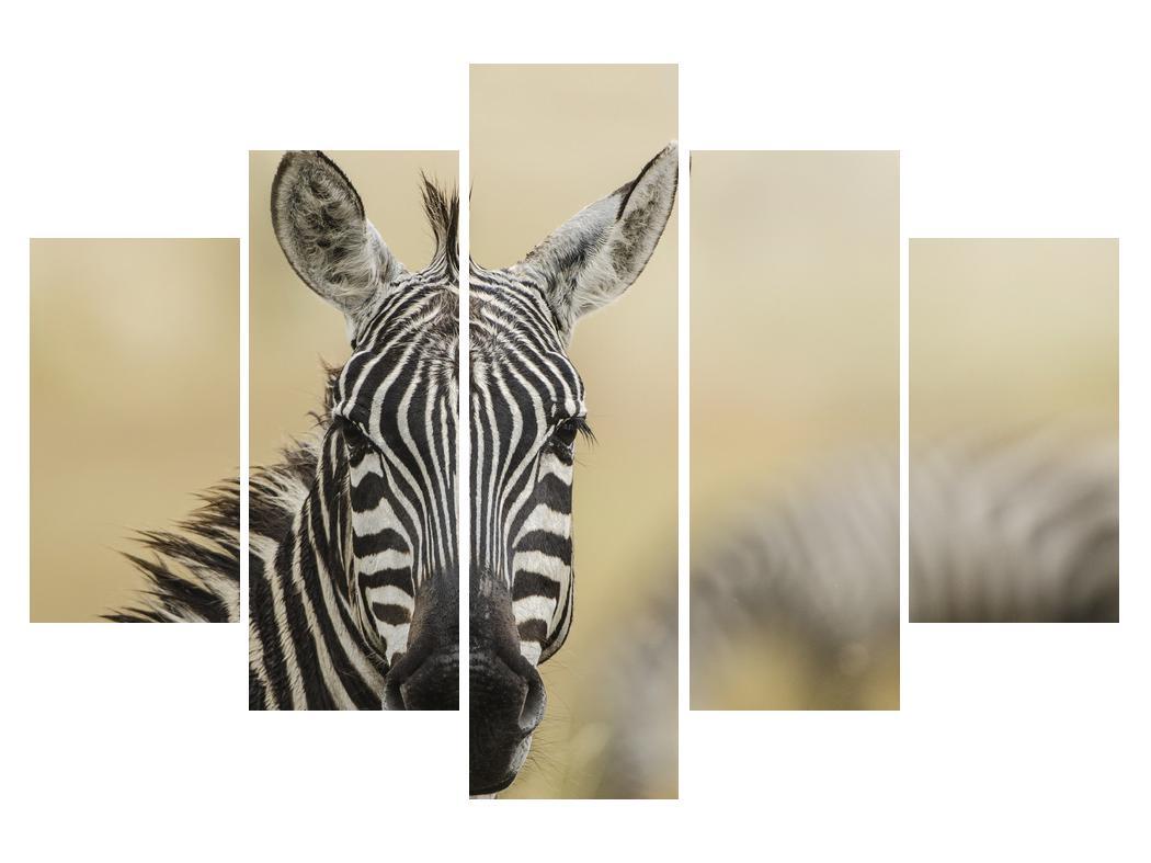 Moderní obraz K011161K150105 (K011161K150105)