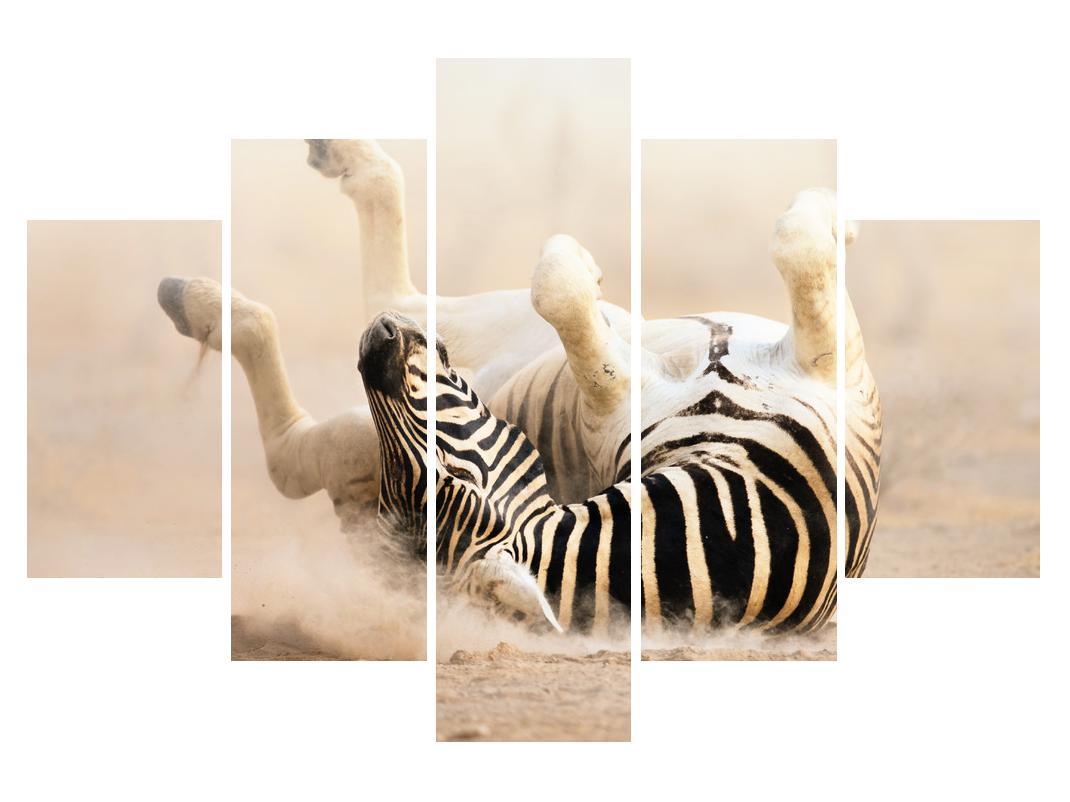 Slika ležeće zebre (K011173K150105)