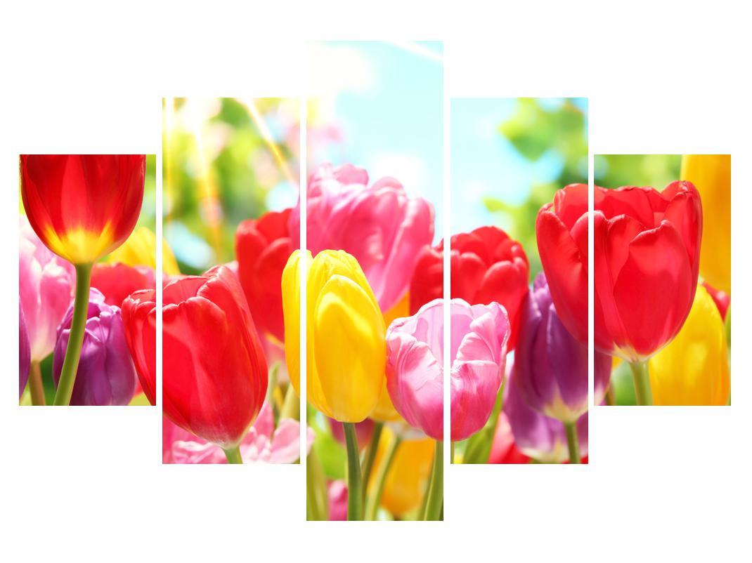 Slika tulipanov (K011255K150105)