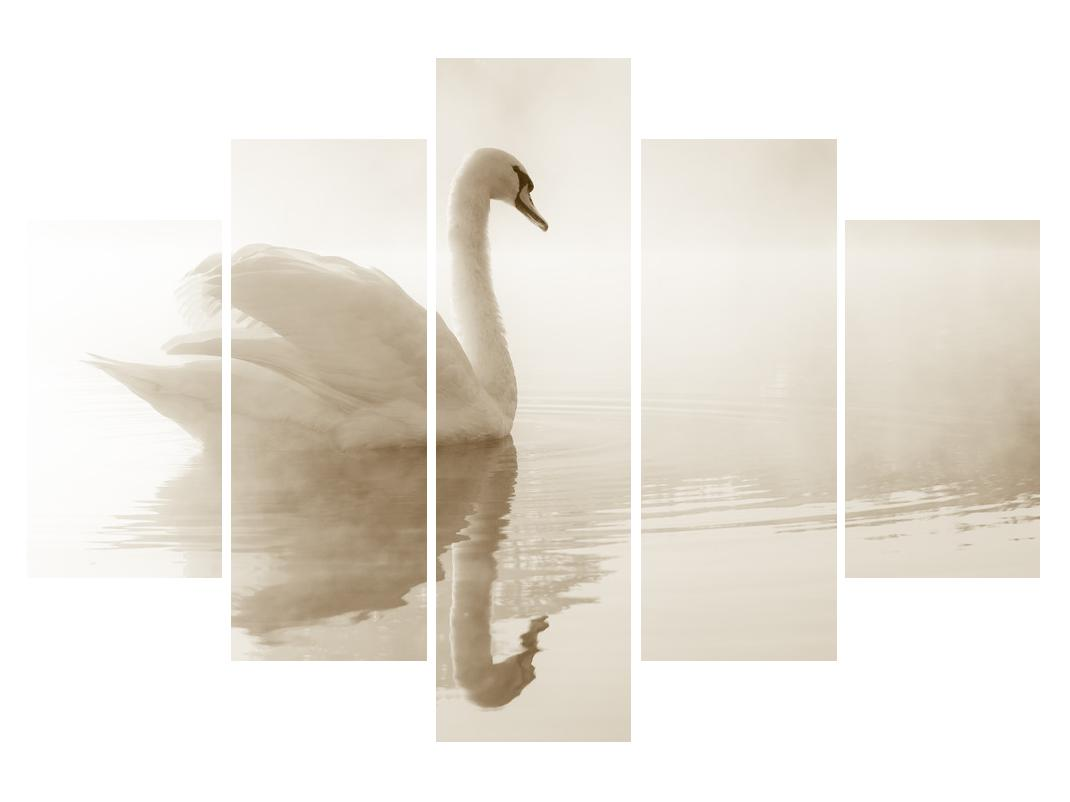 Slika labuda (K011280K150105)