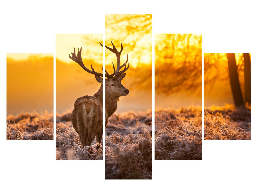 Slika jelena (K011281K150105)