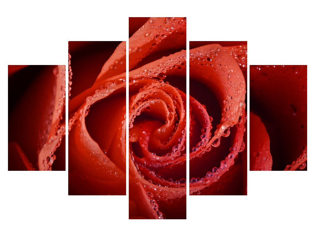 Slika rdeče vrtnice (K011747K150105)