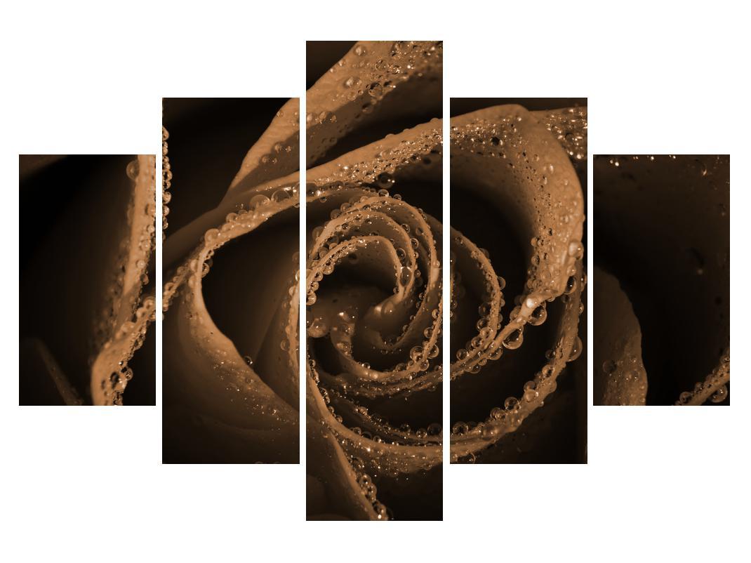 Slika vrtnice s kapljicami (K011862K150105)