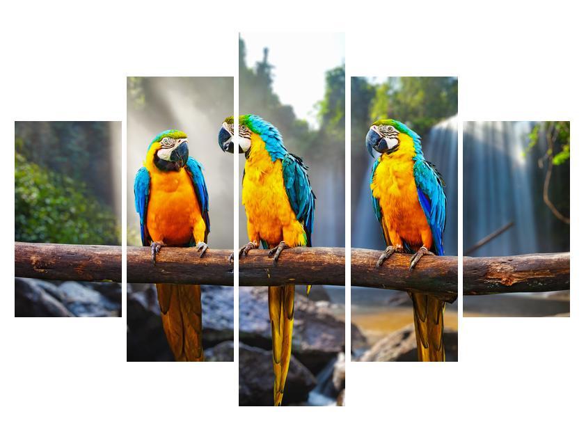 Slika papagajev (K011994K150105)