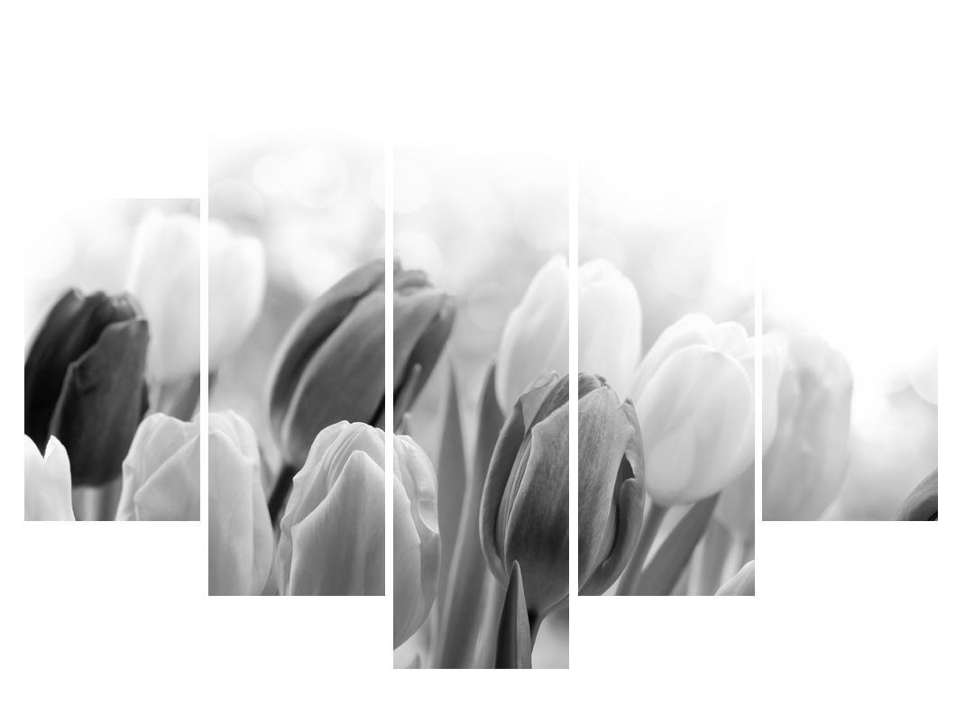 Černobílý obraz pučících tulipánů (K012127K150105)