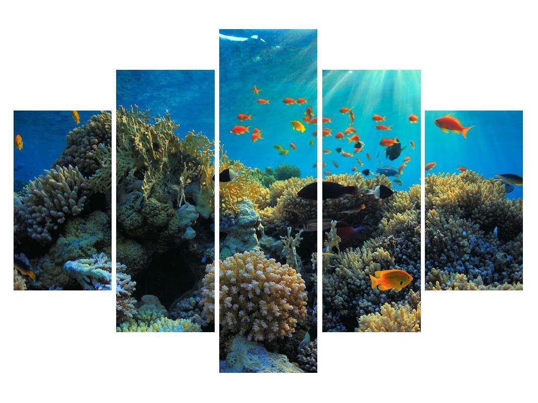 Slika podmorskega sveta (K012161K150105)