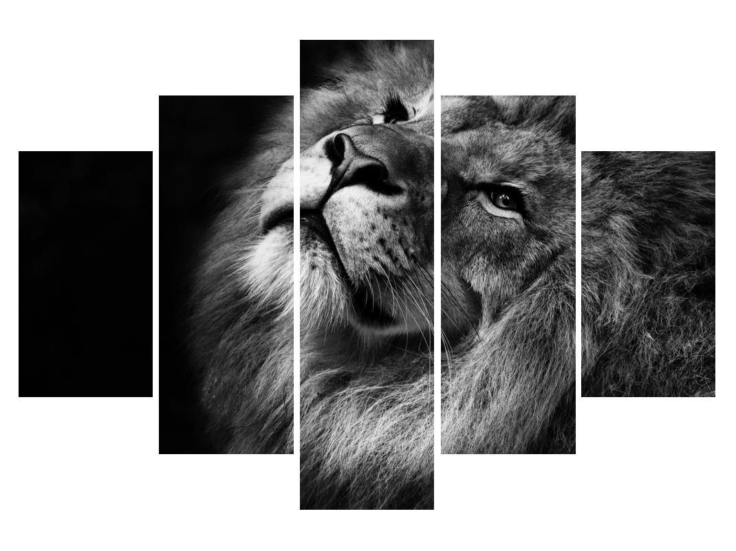 Černobílý obraz lva (K012767K150105)