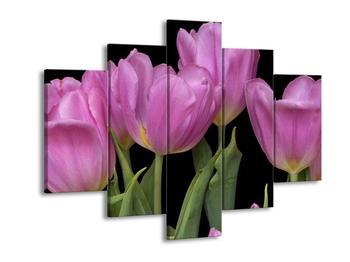 Obraz fialových tulipánů (F000388F150105)