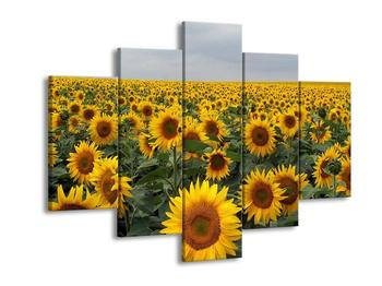 Obraz slunečnicového pole (F000397F150105)