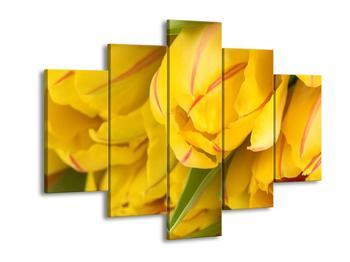 Obraz žlutých tulipánů (F000410F150105)