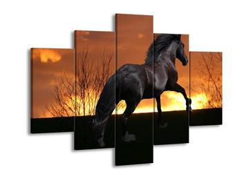 Obraz koně (F000487F150105)