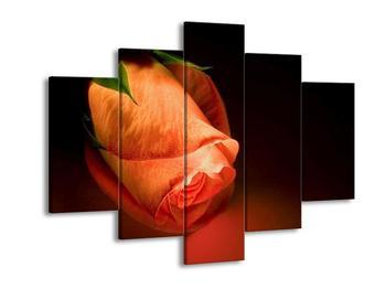 Obraz květu růže (F000488F150105)