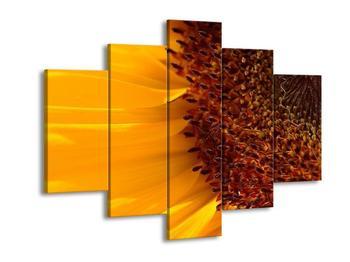 Detailní obraz slunečnice (F000491F150105)