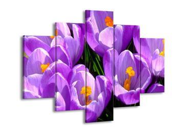 Obraz fialových tulipánů (F000497F150105)