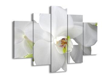 Obraz orchideje (F000510F150105)