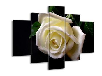Obraz bílé růže (F000537F150105)