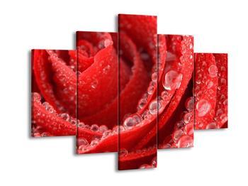 Obraz růže (F000692F150105)