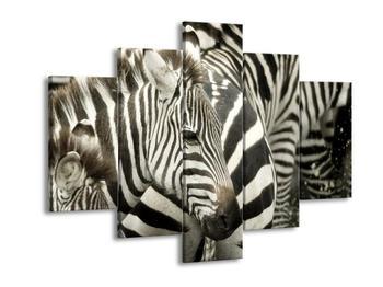 Obraz zebry (F000695F150105)