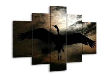Obraz ptáka ve stínu (F000836F150105)