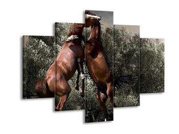 Krásný obraz koní (F000854F150105)