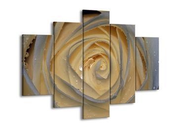 Obraz bílé růže (F000900F150105)