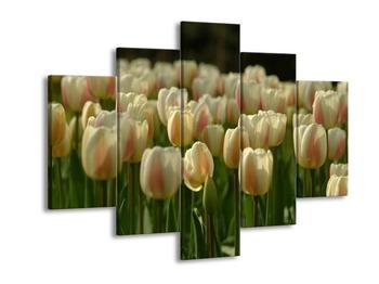 Obraz bilých tulipánů (F000946F150105)