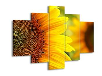 Obraz slunečnice (F001011F150105)