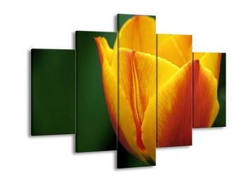 Krásný obraz žlutého tulipánu (F001019F150105)