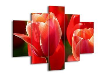 Obraz červených květin (F001300F150105)