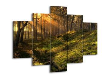 Krásný obraz lesa (F001307F150105)