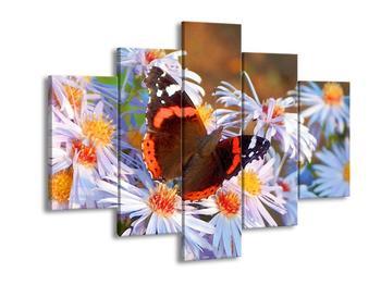 Obraz motýla (F001365F150105)