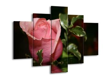 Obraz jemné růže (F001385F150105)