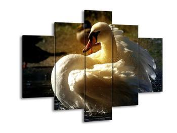 Obraz labutě (F001428F150105)