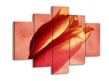 Krásný obraz tulipánu (F001444F150105)