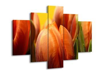 Obraz květu tulipánu (F001528F150105)