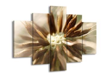 Detailní obraz květu (F001550F150105)