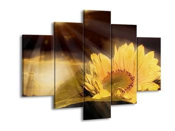 Obraz paprsků a slunečnice (F001562F150105)