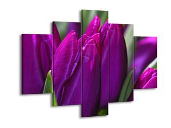 Obraz fialových tulipánů (F001576F150105)
