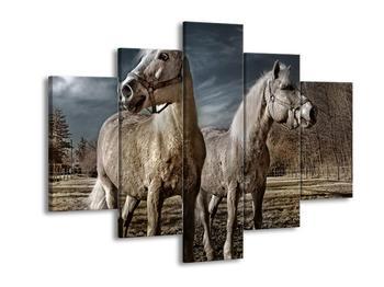 Obraz bílých koňí (F001595F150105)