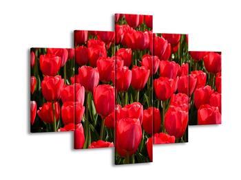 Obraz tulipánového pole (F001598F150105)