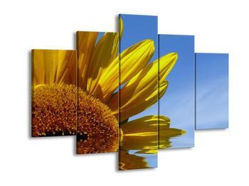 Obraz slunečnice ve vodě (F001611F150105)