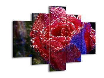 Obraz orosené růže (F001614F150105)