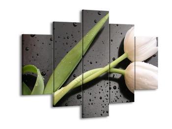 Obraz bílých tulipánů (F001618F150105)